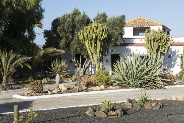 Prachtige tuin met cactussen
