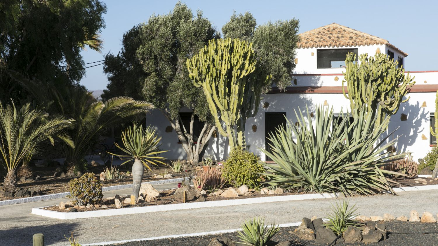 Grote tuin met vele cactussen / Large garden with many cacti